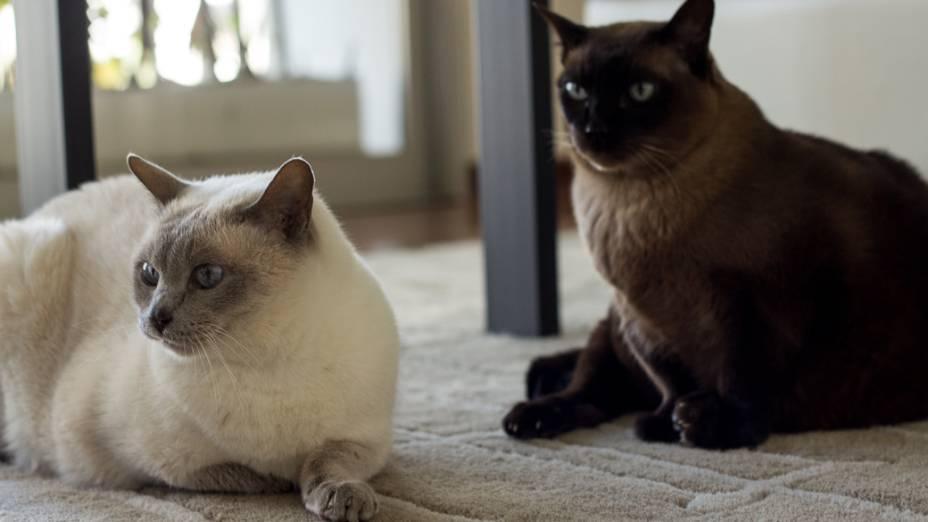 Cíntia Cardoso, pet sitter e dog walker, com os gatos Charlie e Emma
