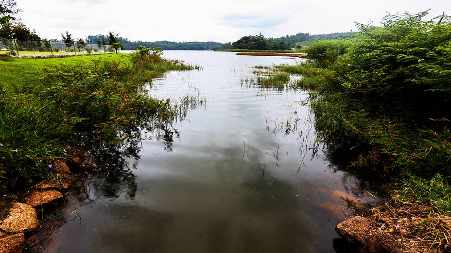 Vegetação circunda a represa de água no Parque da Cidade
