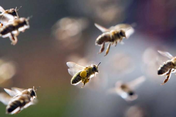 abelhas-frankfurt-alemanha-20110321-original.jpeg