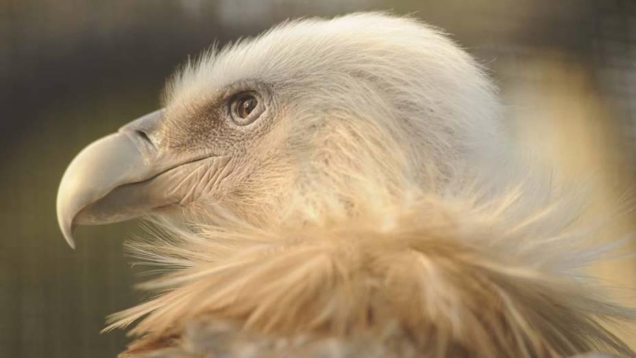 Abutre no zoológico de Xangai, na China