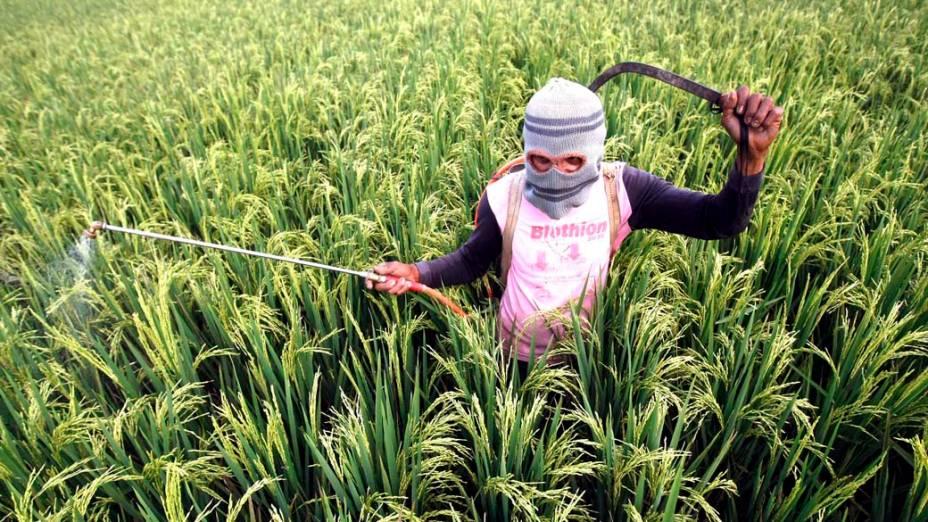 Agricultor trabalha em arrozal na Indonésia