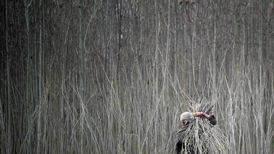 Agricultor carrega lenha na província de Kunduz, no Afeganistão