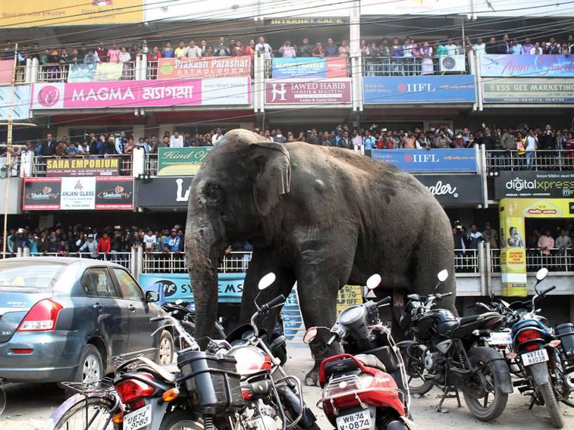 Elefante caminha pelas ruas de Siliguri, na Índia