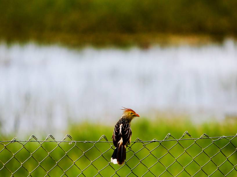 Mais de doze espécies de pássaros vivem no Parque da Cidade