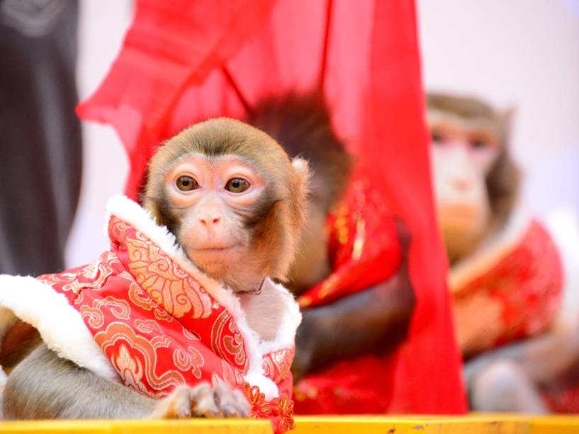 O ano do macaco é comemorado no dia 08 de fevereiro