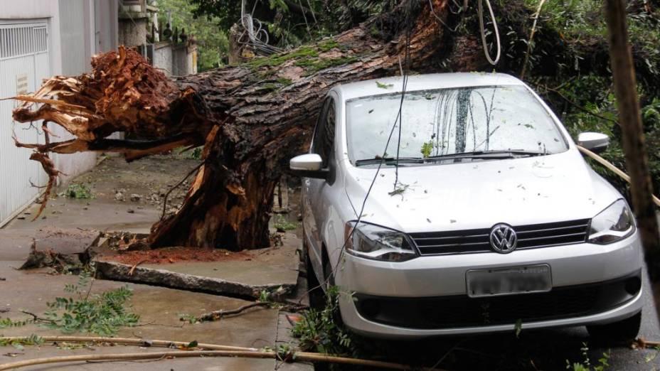 Chuva derruba árvor na Rua Morgado de Matheus, no bairro da Vila Mariana, Zona Sul de São Paulo. A árvore atingiu três veículos e derrubou dois postes