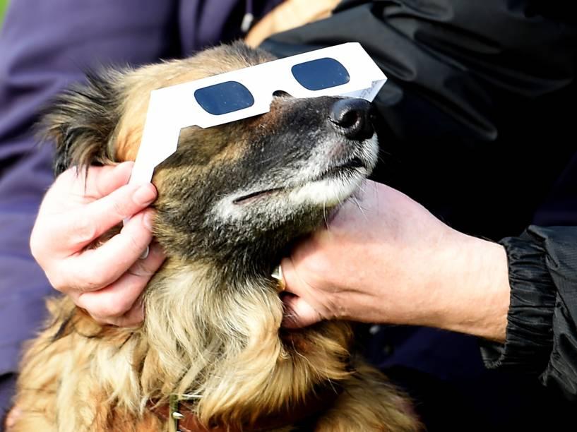 Cachorro usa óculos de proteção durante o eclipse solar em Liverpool, noroeste da Inglaterra