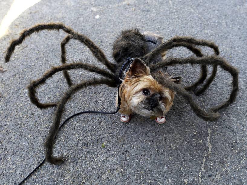 Cachorro vestido de aranha participa do desfile anual de Halloween de cachorro da Tompkins Square, em Nova York, EUA