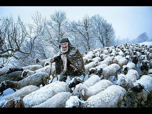 Old Shepherd, fotografia de Saeed Barikani, do Irã