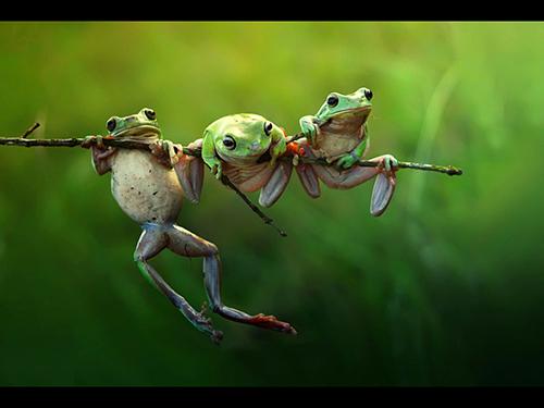 Frog Story, fotografia de Harfian Herdi, da Indonésia