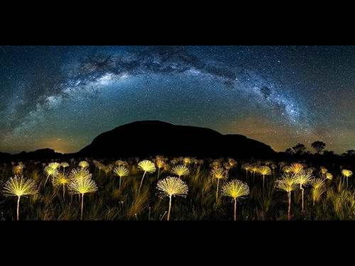 Paepalanthus Galactic, fotografia de Márcio Cabral, do Brasil
