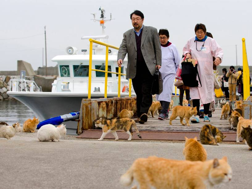 Gatos cercam pedestres que desembarcam no porto da ilha de Aoshima, sul do Japão