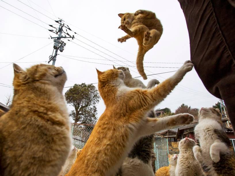 Gatos pulam para pegar comida de turistas que visitam a ilha de Aoshima, sul do Japão