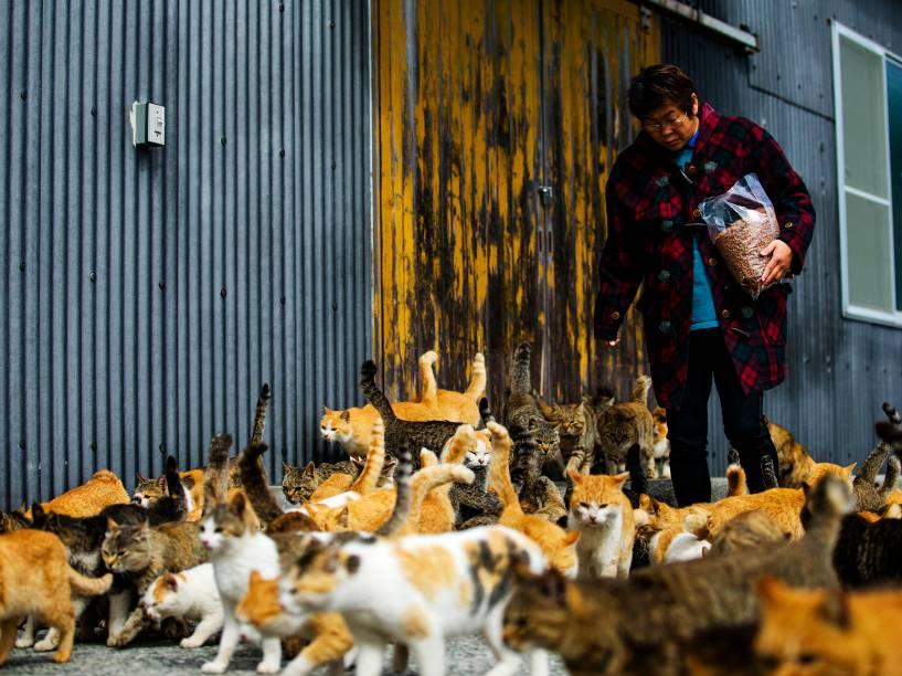 Gatos se aglomeram em torno da enfermeira Atsuko Ogata enquanto ela carrega um saco de comida no local destinado à alimentação dos felinos