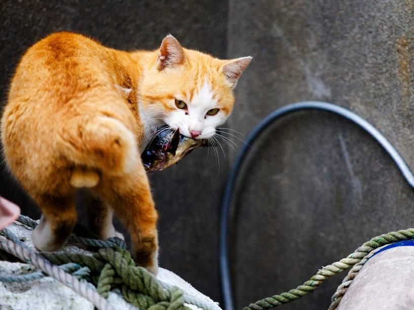 """Gato leva um peixe na boca no porto da ilha de Aoshima, sul do Japão, conhecida como a """"Ilha dos Gatos"""""""