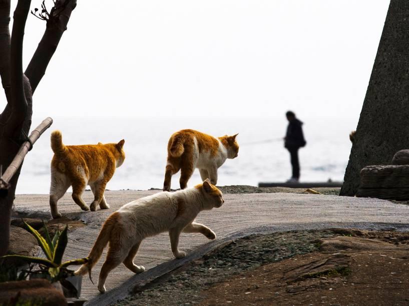 Gatos caminham pelas ruas da ilha de Aoshima, ao sul do Japão