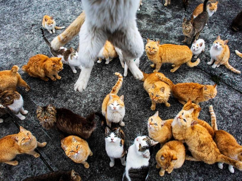 Um verdadeiro exército de gatos ocupa a ilha remota de Aoshima no sul do Japão, abrigando-se em casas abandonadas na vila de pescadores