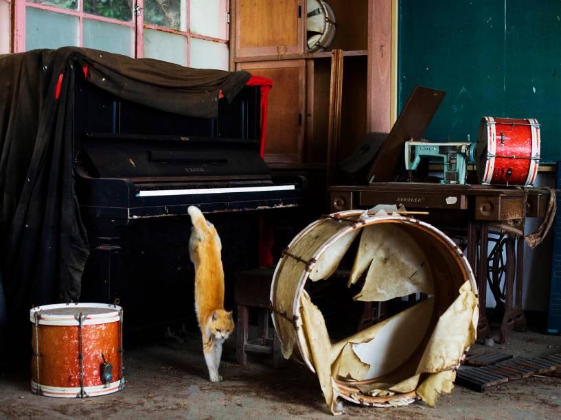 Um gato pula de um piano na sala de música de uma escola abandonada em Aoshima, sul do Japão