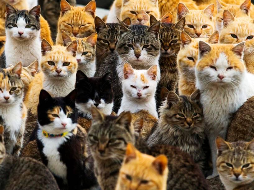 Gatos lotam o porto da ilha de Aoshima no sul do Japão. Estima-se que a população felina seja seis vezes maior que a humana