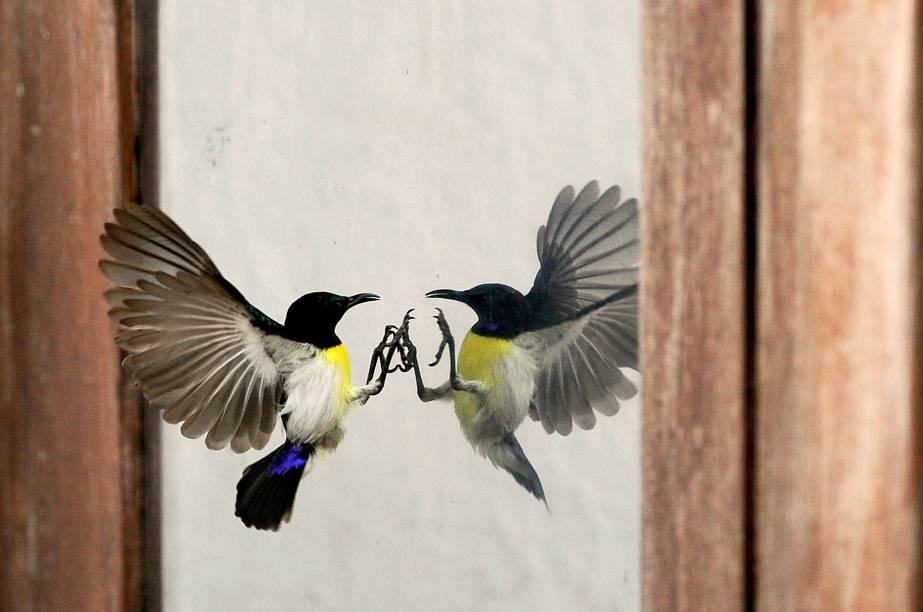 Pássaro tentou pousar na janela de um escritório, na cidade de Colombo, capital do Sri Lanka