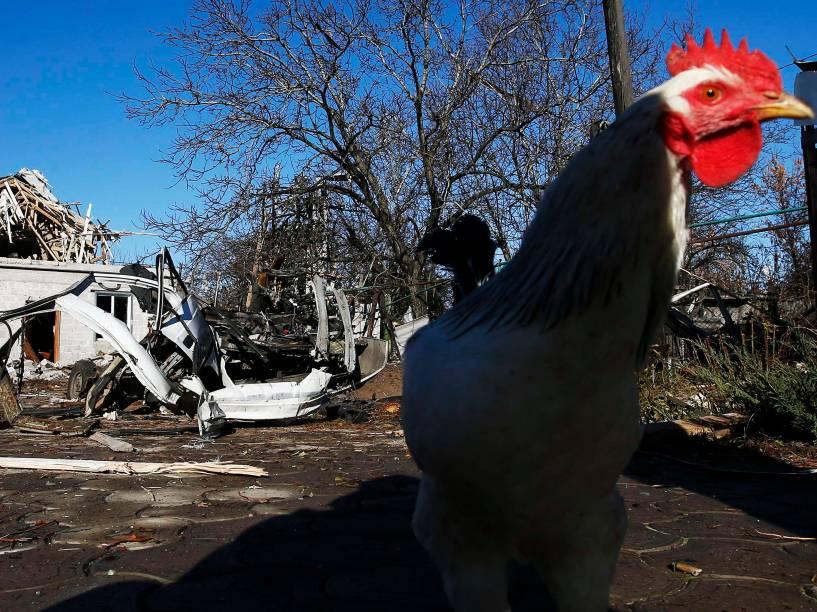 Uma galinha anda perto de um bloco residencial e um carro danificados por um bombardeio em Donetsk, na Ucrânia - 06/11/2014