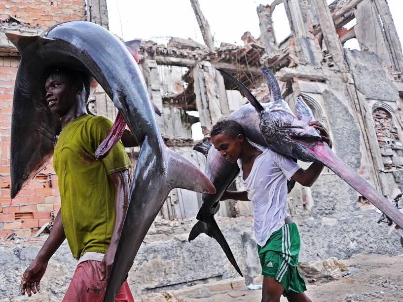 Jovens carregaram as carcaças de um tubarão (à esq.) e um peixe-espada para o mercado local em Hamarweyne perto do porto de Mogadíscio, na Somália