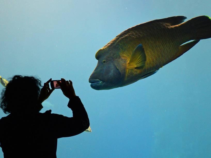 Mulher fotografou um peixe gigante, no Africarium, inaugurado no zoológico de Wroclaw, na Polônia