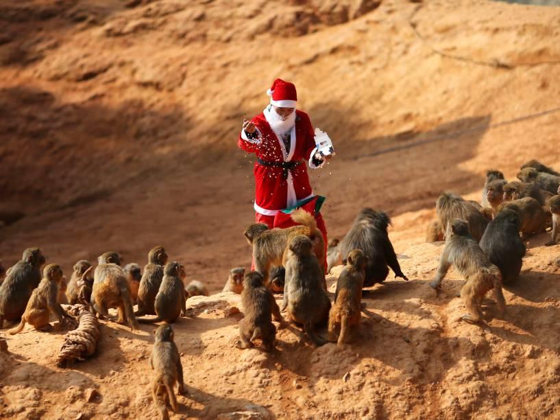 Vestido de Papai Noel, funcionário alimenta macacos no zoológico de Kunming, na China