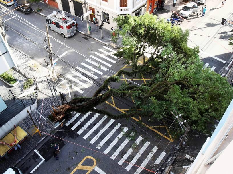 Árvore caída na esquina das ruas Cubatão e Eça de Queiroz, no bairro da Vila Mariana, na zona sul de São Paulo,  após forte chuva que atingiu a cidade na madrugada desta segunda-feira - 29/12/2014
