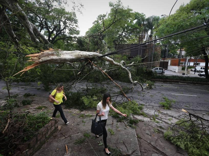 Queda de árvore na avenida República do Líbano, em São Paulo, após por forte chuva na madrugada desta segunda-feira - 29/12/2014