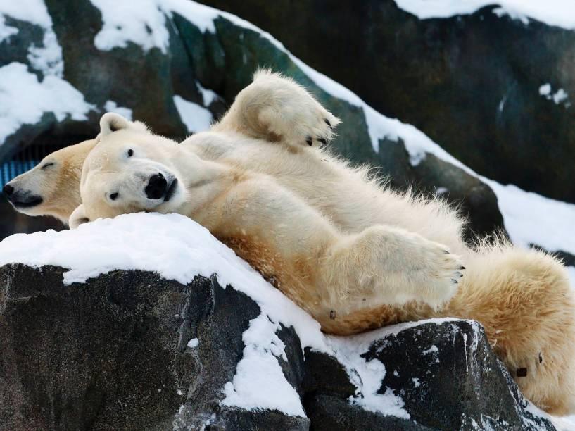 Dois ursos polares relaxam na neve em seu recinto no zoológico Schoenbrunn em Viena, na Áustria- 30/12/2014