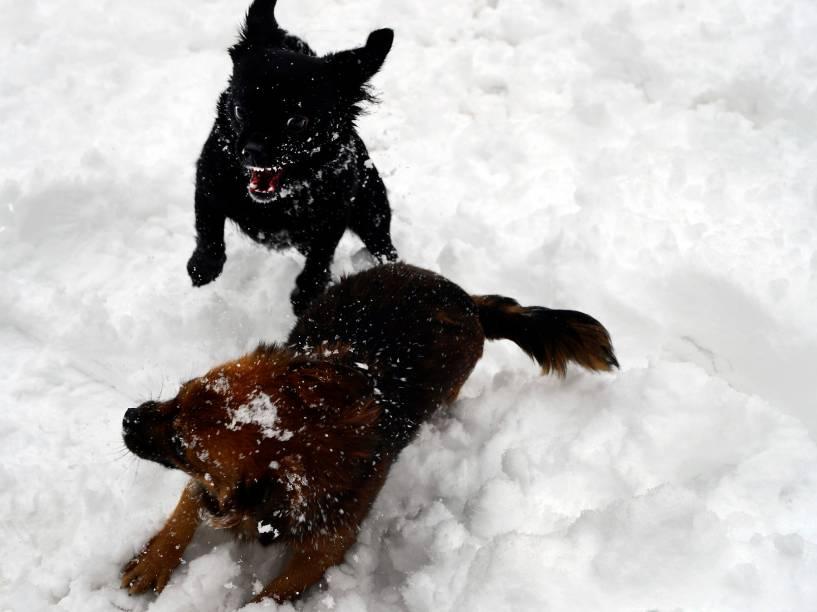 Cães brincam na neve do parque Florida, na cidade de Basque, na Espanha