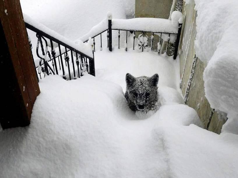 Um filhote de urso foi fotografado a poucos passos da porta de uma casa no município de Prioro, província de León, na Espanha, após uma tempestade de neve - 09/02/2015