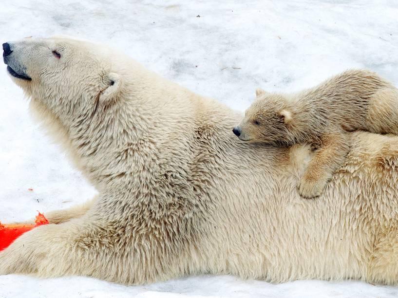 Filhote de urso polar descansa sobre as costas de sua mãe no zoológico de Moscou, na Rússia - 24/02/2015
