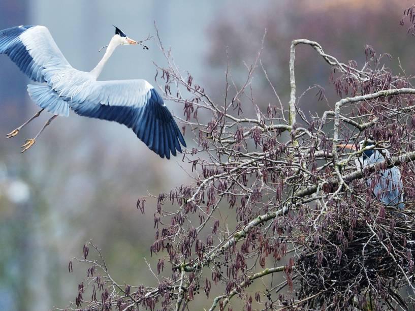 Uma garça-real voa sobre as várzeas do rio Lahn, em Limburg, na Alemanha  - 26/02/2015