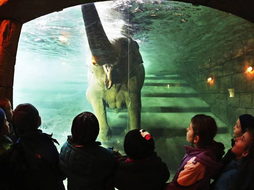 """A elefanta """"Hoa"""" cumprimenta um grupo de crianças durante o banho na piscina para os elefantes no zoológico de Leipzig, na Alemanha - 17/03/2015"""