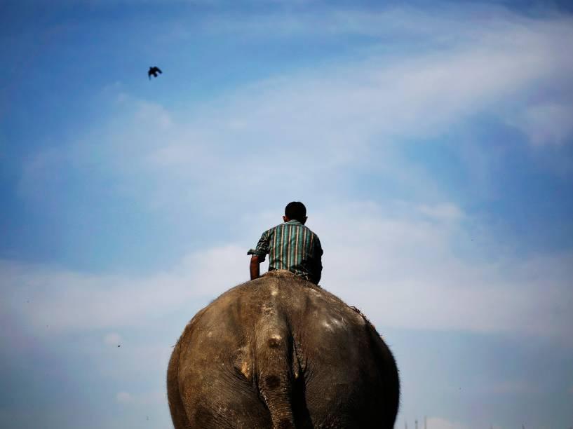 Um mahout, homem que cuida e trabalha como condutor de elefantes, passeia sobre seu animal às margens do rio Yamuna, em Nova Délhi, na Índia - 17/03/2015