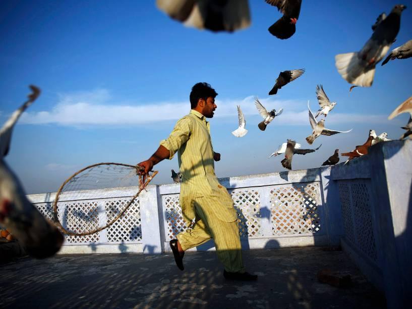 Homem coloca seus pombos de estimação para voar do telhado de sua casa em um bairro antigo de Délhi, na Índia - 18/03/2015