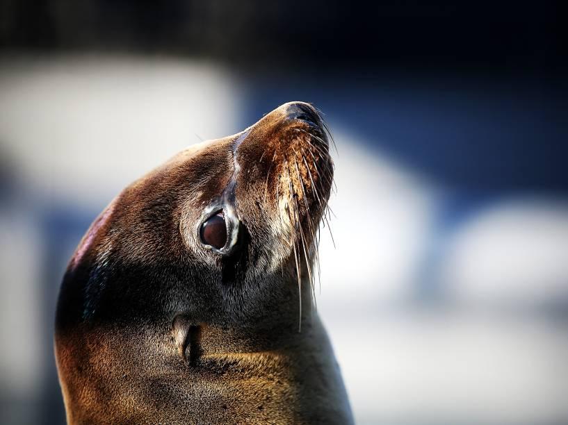 Filhote de leão-marinho doente e subnutrido é fotografado em um centro de  tratamento para mamíferos marinhos em Sausalito, na Califórnia - 18/03/2015