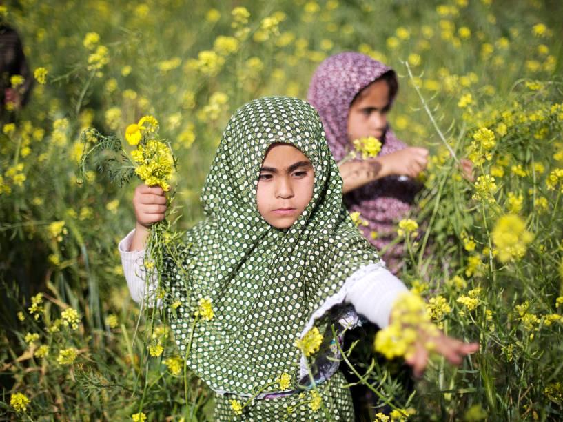 Meninas palestinas colhem flores de mostarda em campo na Faixa de Gaza - 20/03/2015