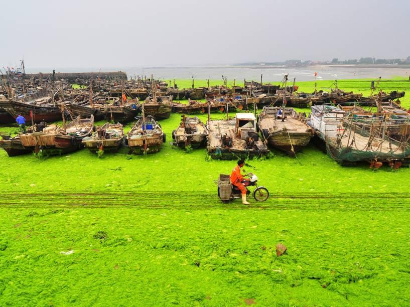 Em Rizhao, província de Shandong, na China, praia local é coberta por algas - 08/07/2015