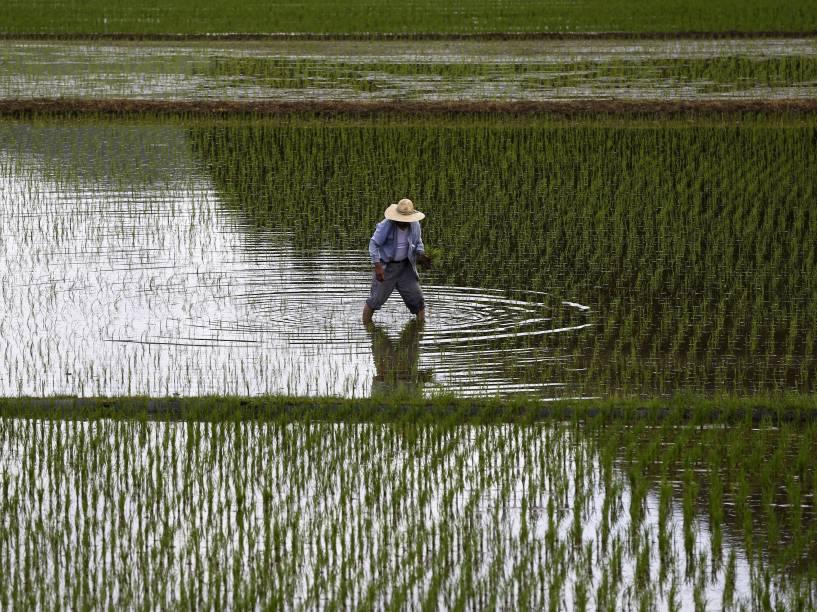 Agricultor é fotografado enquanto planta mudas em um campo de arroz em Satsumasendai, Kagoshima, no Japão - 08/07/2015