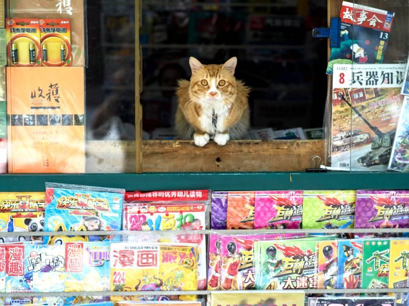 Gato é fotografado sentado na janela de uma banca de jornal em Xangai, na China- 16/07/2015
