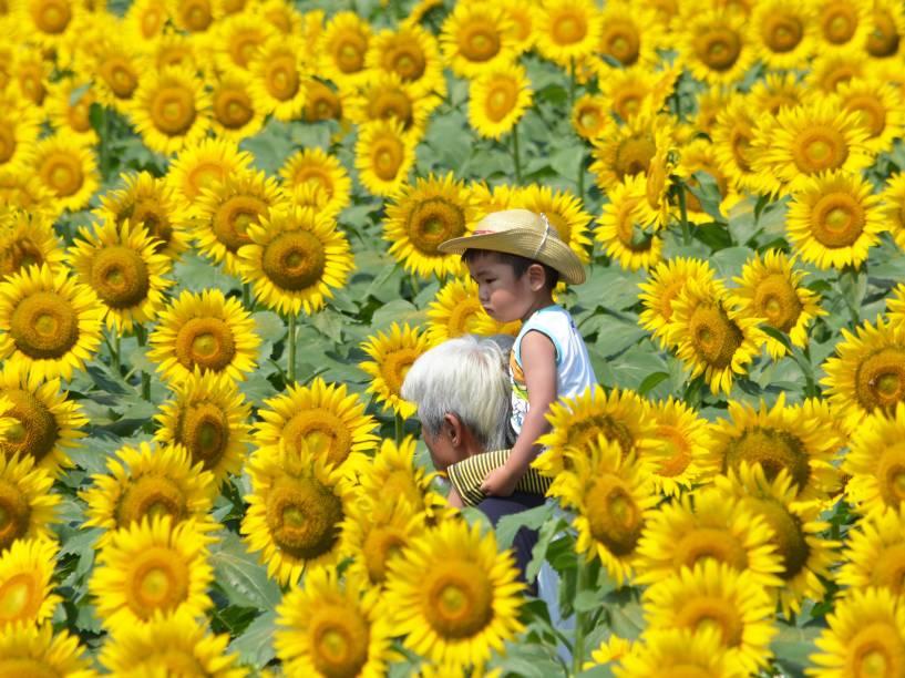 Um menino monta nos ombros de seu pai enquanto caminham por um campo de girassóis em Tóquio, Japão - 29/07/2015