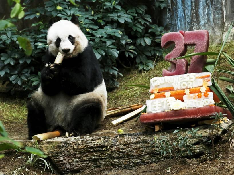 A panda gigante Jia Jia, recebeu um bolo de aniversário feito de frutas e gelo para comemorar seus 37 anos, no Ocean Park, em Hong Kong. Ela é o panda em cativeiro mais velho do mundo, sua idade equivale aproximadamente a de um ser humano de 100 anos