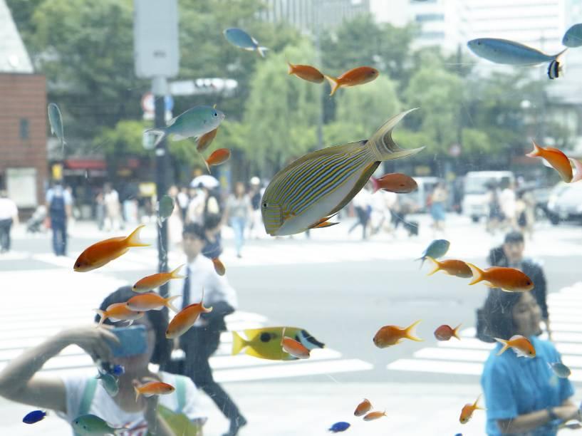 Peixes tropicais do sul da ilha de Okinawa são expostos em um aquário temporário no distrito de Ginza, em Tóquio - 29/07/2015
