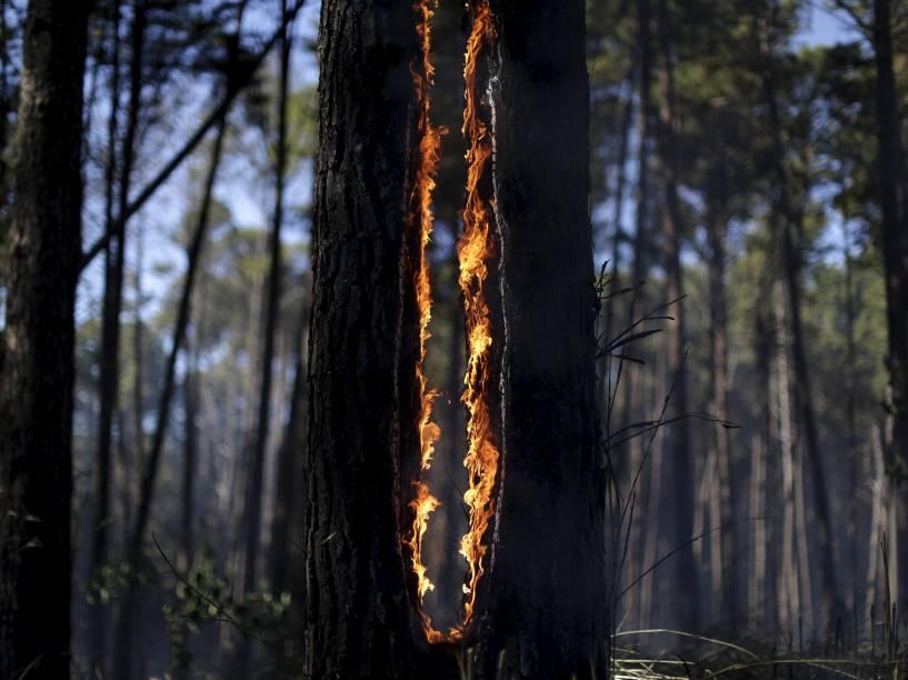 Árvore em chamas próximo a Pananoá, em Brasília. Seca, altas temperaturas e baixa umidade tem causado incêndios em diversas áreas do distrito federal - 29/07/2015