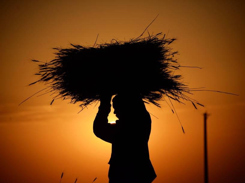 Após colheita, agricultor afegão transporta feixes de trigo nos arredores de Mazar-i-Sharif - 04/08/2015