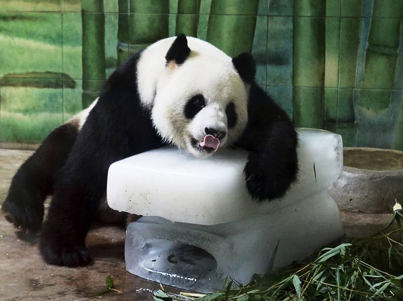 Panda gigante Weiwei inclina-se sobre blocos de gelo para se refrescar dentro de seu recinto no zoológico de Wuhan, na província de Hubei, na China - 04/08/2015