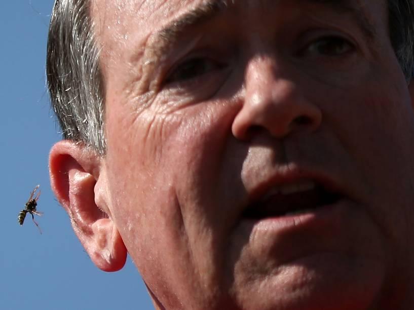 Uma vespa é fotografada perto da orelha do candidato republicano à presidência dos EUA Mike Huckabee durante evento em uma Feira do Estado em Des Moines, Iowa